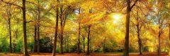 Canvas Bomen 50x150cm - kleur